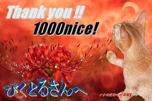 1000 nice! to びくとるさん.JPG