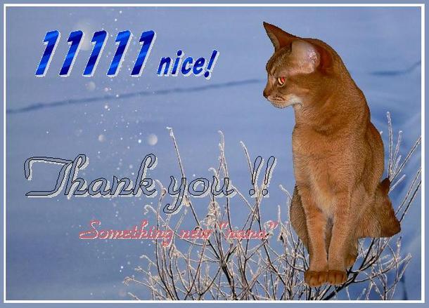 11111nice! free.JPG
