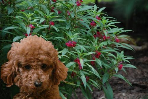 ももっち&赤い花.JPG