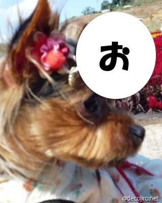 チャコちゃん2.jpg