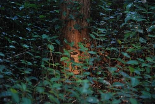 不思議の森の木.jpg