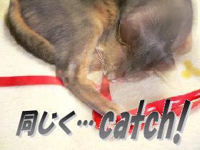 a_catch.JPG