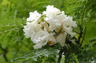 white4.JPG